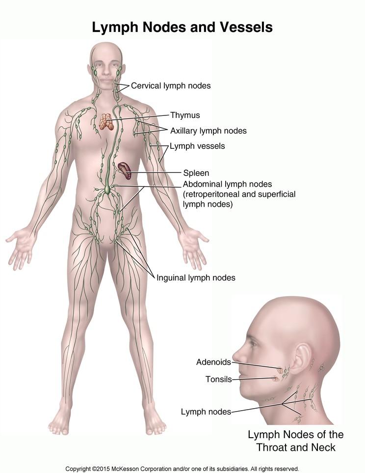 Lymph Nodes and Vessels: Illustration